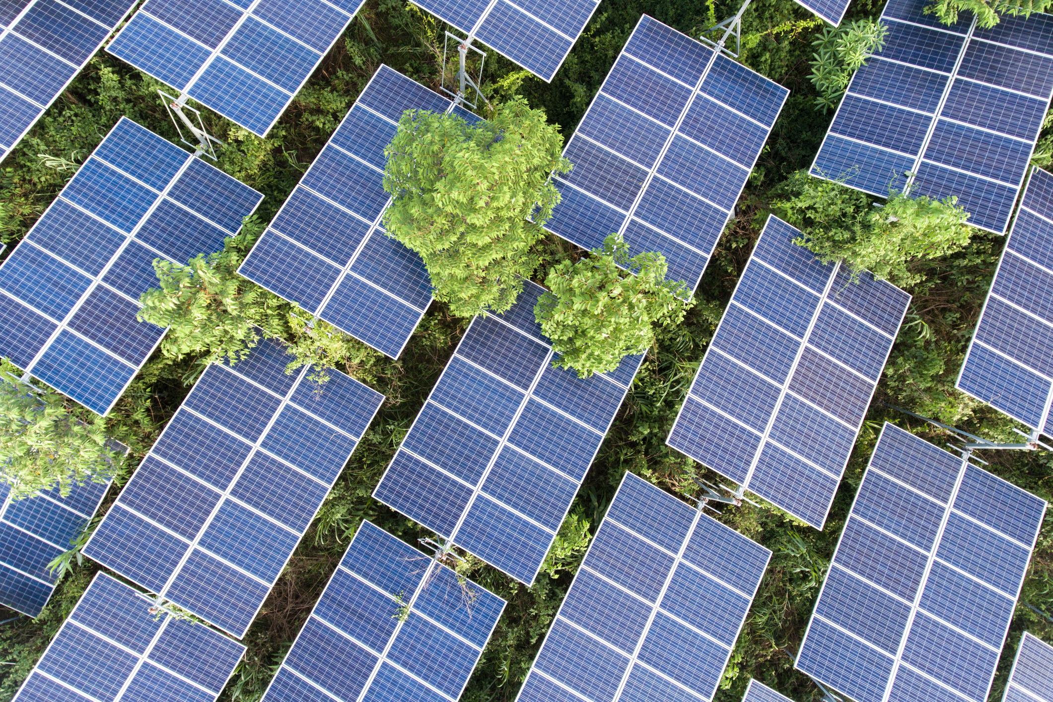 太陽光パネル_ソーラー_Aerial View Of Solar Panels On Tree