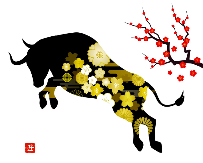 New Year's card illustration material, Ox year, Bullfighting, Japanese style Plum tree